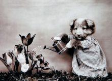 Я садовником родился