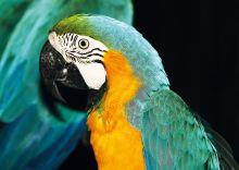 Почтовая открытка Попугай Ара
