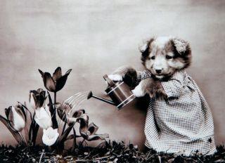 Почтовая открытка Я садовником родился